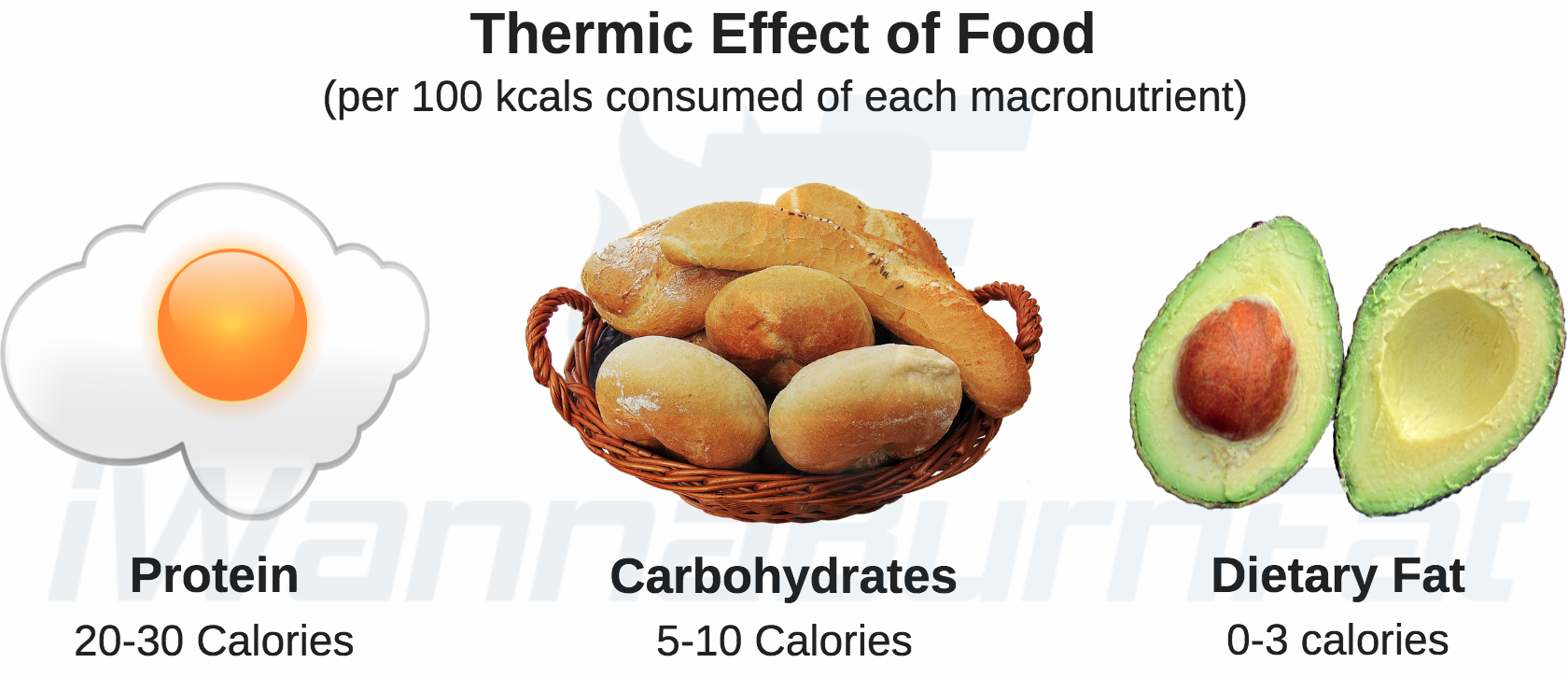energy expenditure: thermic effect of food